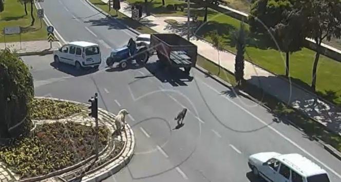 Köpeğe çarpmamak için durdu, traktör ona çarptı!
