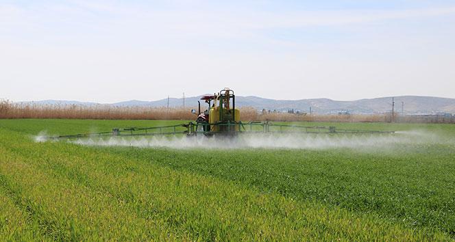 Pamuk hasadı sonrası boş kalan tarla çiftçiyi zengin ediyor