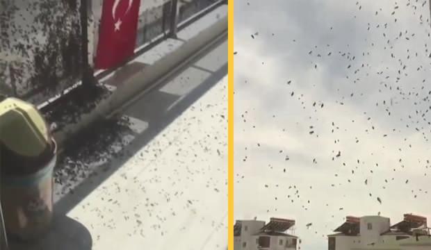 Antalya'da korkutan arı istilası