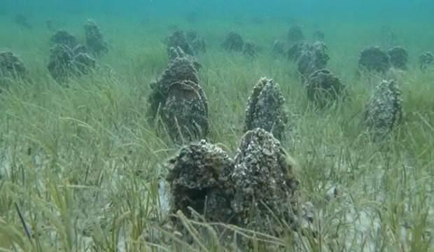 Çanakkale Boğazı'nda 'Pina' mezarlığı!