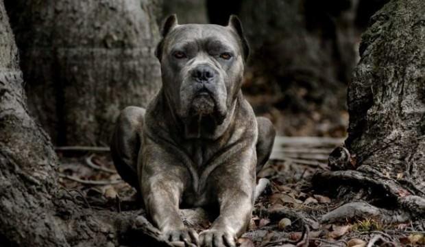 Köpek saldırısına uğrayan çocuk hayatını kaybetti