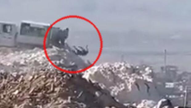Denizli'deki çöplükte infial yaratan görüntüler!