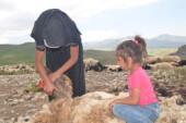22 yaşındaki genç kız koyunlara çobanlık yapıyor