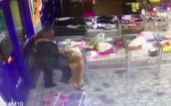 Pitbull cinsi köpek minik kıza böyle saldırdı
