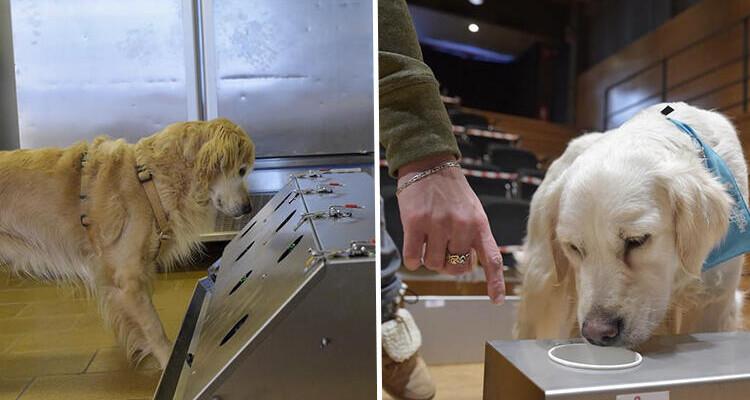 Mutasyonlu virüsü köpekler tespit ediyor